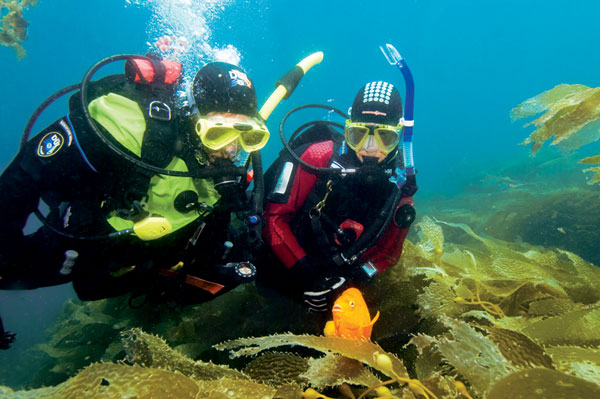 Open Water Scuba Diver Course